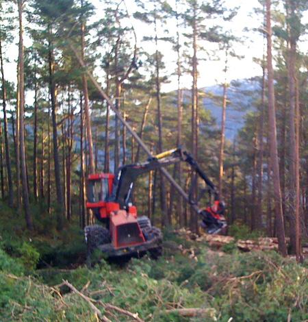 skogtur